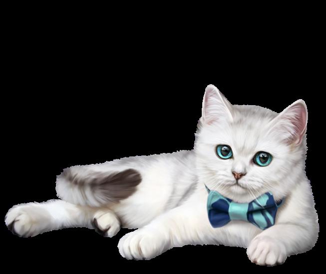 Сублимация кот с бантиком