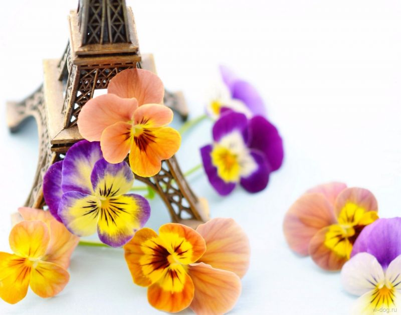 Сублимация Париж 1