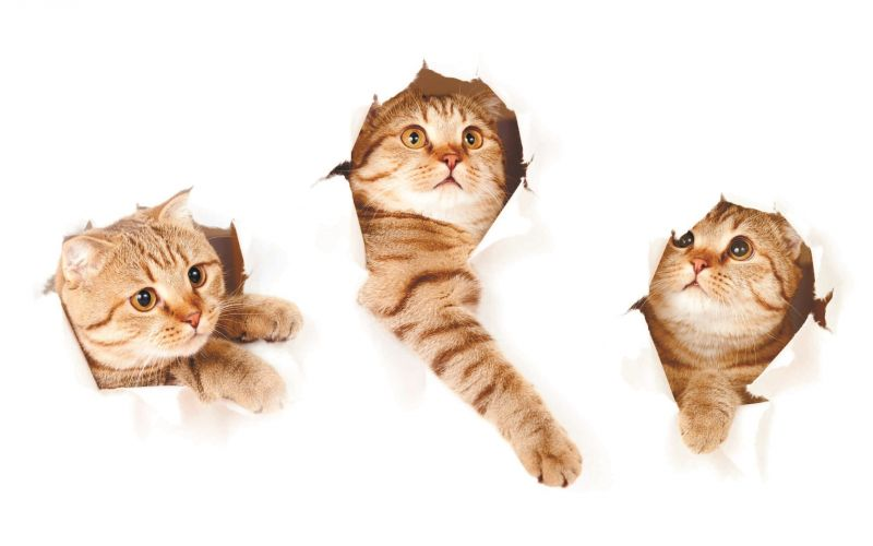 Сублимации три кота