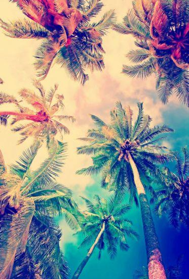 Сублимация пальмы