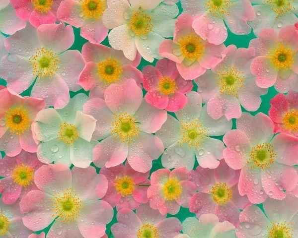 Сублимации цветы 5